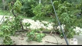 В столице дерево раскололось и упало у жилого дома(, 2013-06-24T07:26:18.000Z)