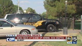 MCSO back at the scene of dog kennel deaths