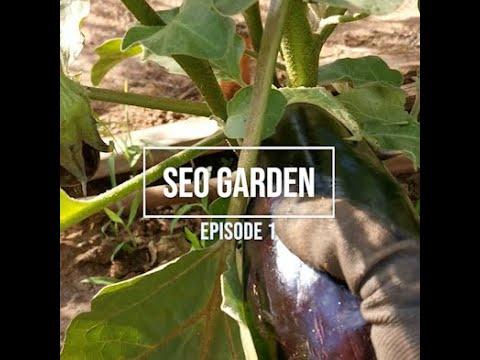 SEO Garden, Episode 1, Information Gain Scores