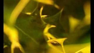 Смотреть клип Blur - Chemical World