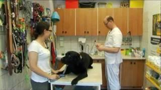 Jak pies z kotem - odcinek 03 (czerwiec 2011)