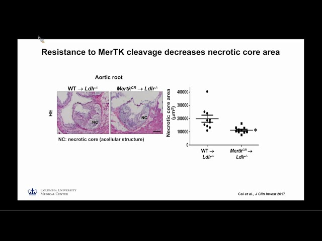 Atherosclerosis and non-alcoholic steatohepatitis