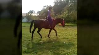 Crazy Horses - fails, galop