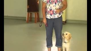 Lady Shows Off Her Obedience Training After 7 Days At Animal Stars May 2013