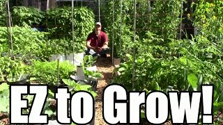 10 Low Maintenance Crops: Grow More, Work Less, & Spend Less