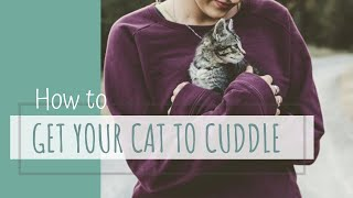 Making Cats more Cuddly, Friendly, and Affectionate  How to get your cat to love you!