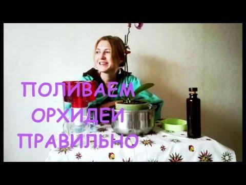 """ПОЛИВ ОРХИДЕЙ методом """"Погружения"""""""