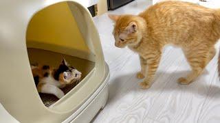 【2日目】先住猫がいいやつすぎて泣ける