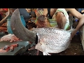 Incredible Big Barramundi / Asian Sea Bass Fish Cutting in The Fish Market