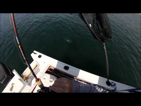 Port Botany Fishing 7-11-2014