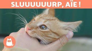 Pourquoi mon chat me lèche puis me mord ?