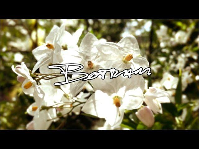 Botram - Lotus