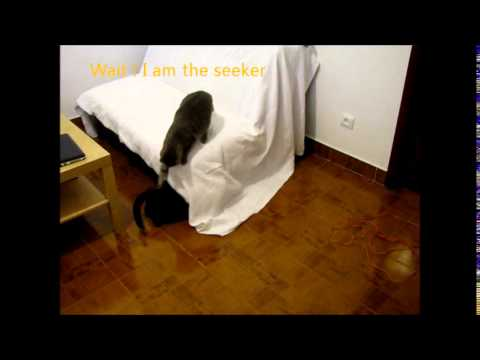Funny cats kingdom S01E01 Cats playing Hide and Seek
