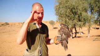 Hawk and it's Trainer