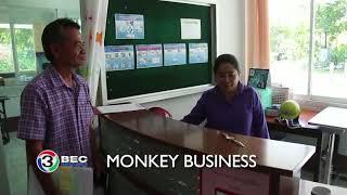 MONKEY BUSINESS   Ch3Thailand