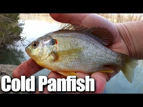 Late Winter Bluegill And Sunfish - Cold Water Fishing For Panfish