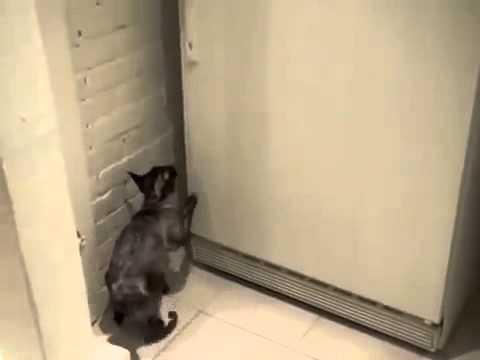 Холодильник кот открывает