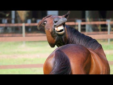 funniest animals try not