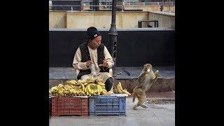 Monkeys Are Mean Sometimes