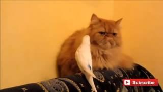 Любовь - кота и попугая