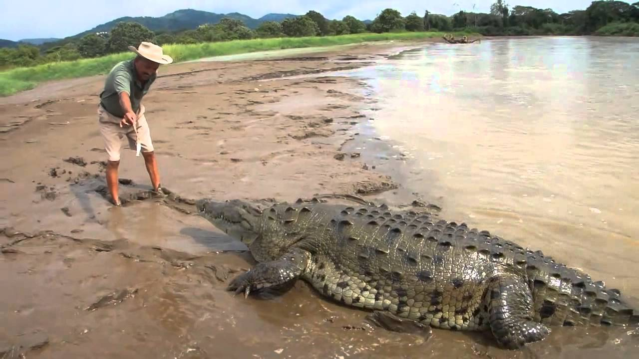 Crocodile attacks man - YouTube