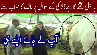 Funny Answer By Bull Owner | Amazing React By Girl | Chai Time