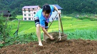 农村姑娘干的这种活这年代还有多少人愿意做?在外的你想回家了吗
