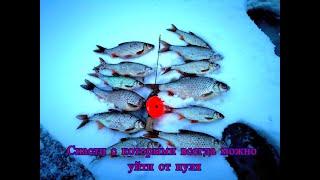 Капризная плотва на химкинском водохранилище Зимняя рыбалка без мотыля