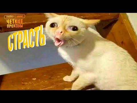 Я РЖАЛ ПОЛЧАСА. Смешные Коты и Собаки. ПРИКОЛЫ С ЖИВОТНЫМИ 2.0
