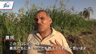 JICAの協力 エジプト編 小規模農家支援~売れる野菜で所得アップを~