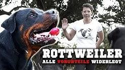 ROTTWEILER - Ein aggressiver Kampfhund? Informationen zur Rasse & Training