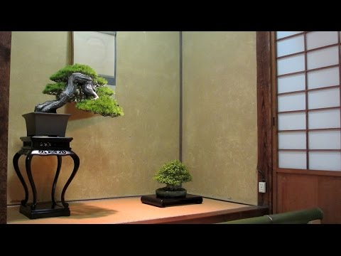 Bonsai gardens in Japan