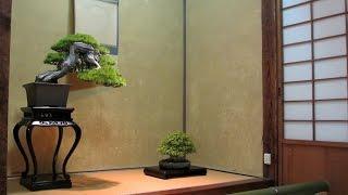 Bonsai gardens in Japan