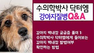 강아지 백내장 궁금증 풀이 1: 수의학박사 닥터엠에게 …
