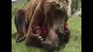 amazing loving animals