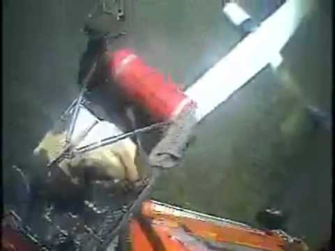 Coast Guard Rescues Pilot and Dog from Downed Aircraft