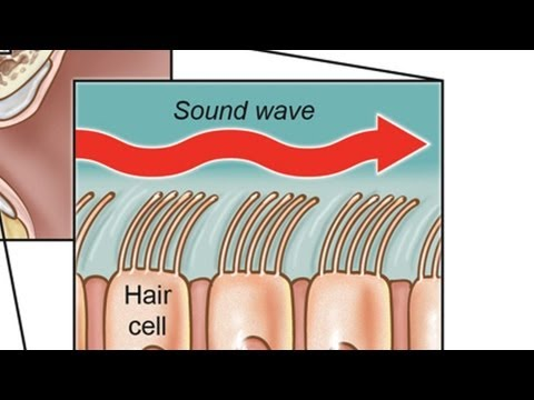 3 Different Types of Hearing Loss | Ear Problems
