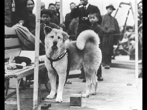 Hachiko - You Will Always Be Remembered