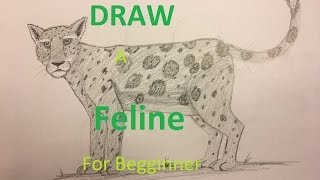 How to DRAW a feline for beginners
