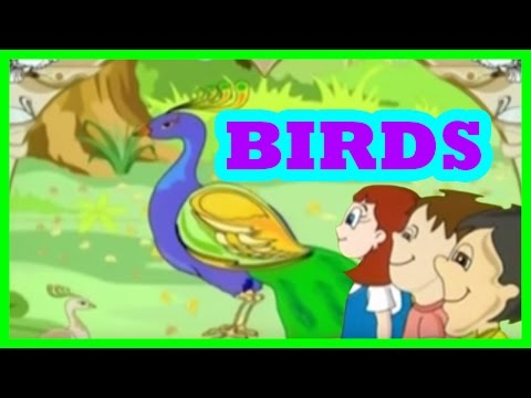 Birds Song for kids