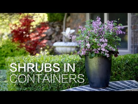 Planting Shrubs in Containers