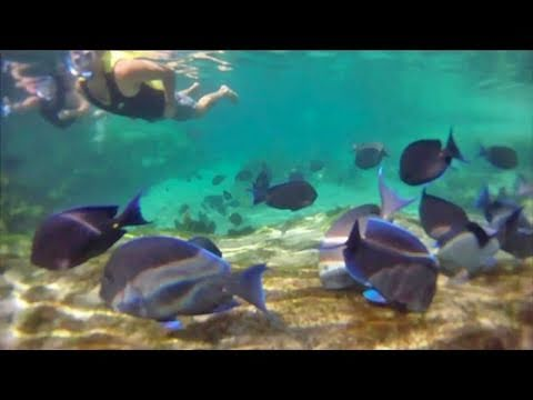HD Underwater Swim through Discovery Cove water park at SeaW
