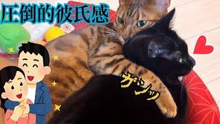 イケメンベンガル猫が黒猫に圧倒的彼氏感を爆発させています!