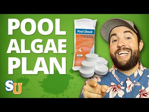 Emergency GREEN POOL WATER Plan [Step-By-Step Guide] | Swim University