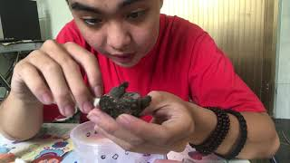 Cách trị nấm cho rùa | Tiểu phẩu - bôi thuốc | PPeng_Tv