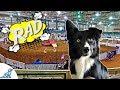 Rad Experience At Cynosport World Games 2017/Dog Vlogs Ep 47/