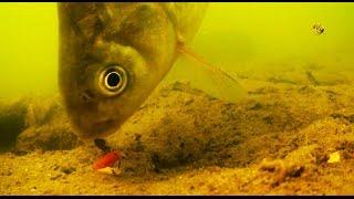 Поклевки на Поплавочную удочку с двух камер. Рыбалка. Ловля карася на поплавок. fishing(Поклевки на Поплавочную удочку с двух камер. Ловил на опарыша. Глубина 1,4м. .….((Мой канал- это (в основном)..., 2016-07-27T11:35:21.000Z)