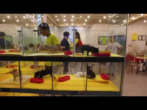 Chungmuro puppy stores part 3 - night time