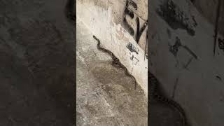 Serpente in zona posta