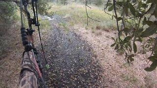 Buck Fever - Miss at 5 Yards - Still Hunting Archery